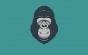 голова, минимализм, monkey, обезьяна, gorilla, горилла