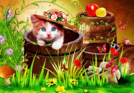 котенок, гриб, цветы, шляпа, бочки, фон
