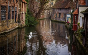 канал, дома, лебеди