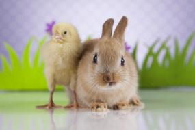 друзья, кролик, цыпленок