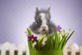 корзинка, кролик, фон, цветы