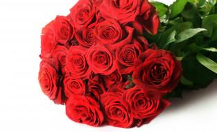 обои для рабочего стола 4336x2634 цветы, розы, букет, бутоны