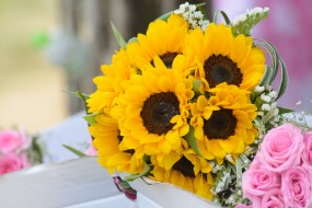цветы, подсолнухи, букет