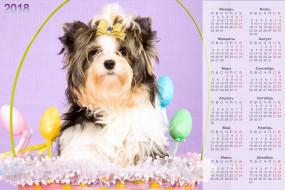 собака, 2018, взгляд, яйцо