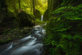папоротник, водопад, США, Mossy Grotto Falls, лес, Oregon