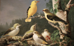 рисованное, живопись, птицы