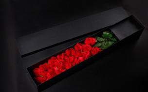 подарок, коробка, розы, алый
