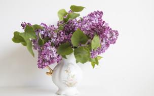 ваза, сирень, цветы, букет