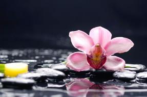 цветы, камни, вода, орхидея