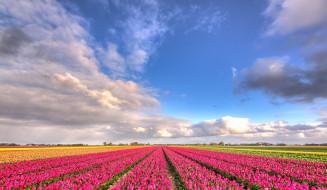 голубое небо, облака, природа, поле, цветы