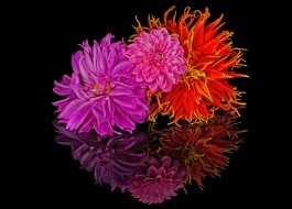 цветы, букеты,  композиции, лепестки, отражение, букет