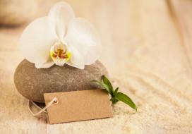 песок, цветок, орхидея, камни