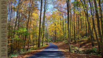 осень, деревья, дорога, 2018
