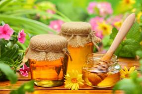 цветы, банки, мед