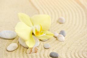 цветок, камни, песок, орхидея
