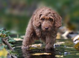 животные, собаки, вода, взгляд, собака