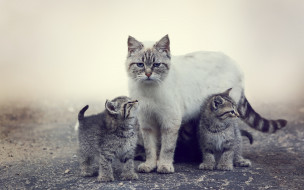 кошка и котЯта, животные, коты, кошка, котята