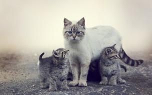 Животные, котята, кошка