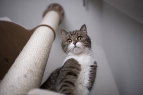 котик, животные, коты