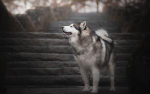 животные, собаки, лестница, собака
