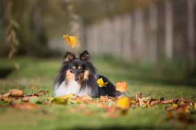 животные, собаки, листья, осень