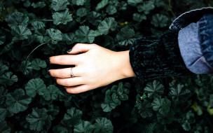 рука, кольцо, листья