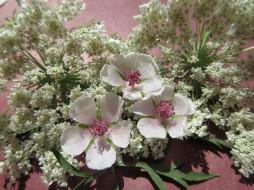 цветы, разные вместе, полевые