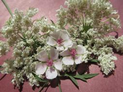 цветы, разные вместе, полевые, разные