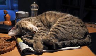 животные, коты, сон, кот, кошка, стол, журнал