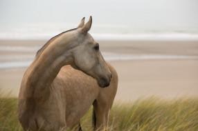 животные, лошади, конь, позирует, грация, смотрит, трава