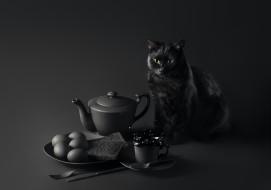 кот, животные, коты