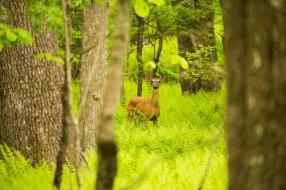лето, зелёный, деревья, стволы, чаща, лес