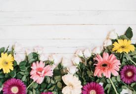 цветы, лепестки, розы, герберы