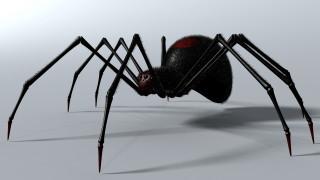 3д графика, животные , animals, паук