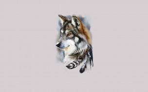 волк, перья, морда
