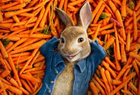 кино фильмы, peter rabbit, peter, rabbit