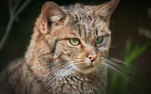 животные, коты, морда