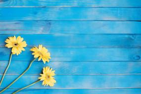 цветы, желтые, гербера
