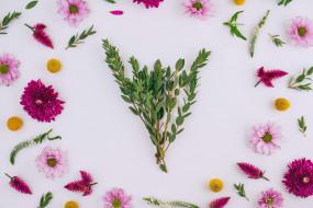 frame, цветы, flowers, pink, floral, хризантемы, background