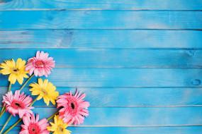 цветы, герберы, желтые, розовые