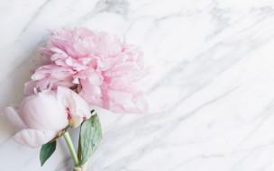 цветы, пионы, букет, flowers, tender, peonies, pink, мрамор, marble