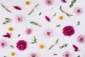 цветы, разные вместе, flowers, pink, floral, хризантемы, background