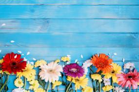цветы, разные вместе, герберы, хризантемы, лепестки, голубой, фон