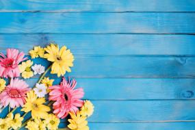 гербера, хризантема, цветы, голубой фон