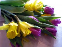 цветы, разные вместе, бутоны, нарциссы, тюльпаны