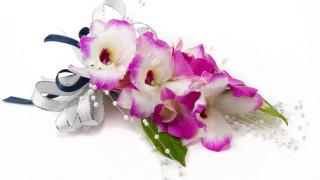 цветы, орхидеи, букет