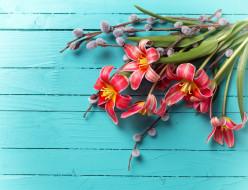 цветы, тюльпаны, верба
