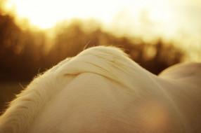 масть, окрас, свет, блики, солнце, макро, шерсть, грива, конь, белый