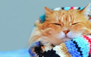боке, шарф, кот