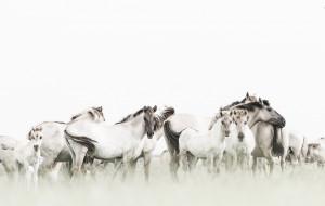 кони, фон, природа